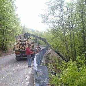 Forestazione e legname
